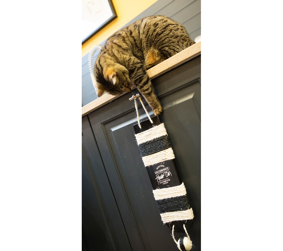 griffoir wall griffoirs bobby accessoires pour chien et chat colliers manteaux pulls. Black Bedroom Furniture Sets. Home Design Ideas