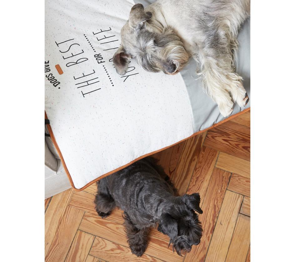 Plaid boston plais duvets et multirelax bobby accessoires pour chien et chat colliers - Proteger canape griffes chat ...
