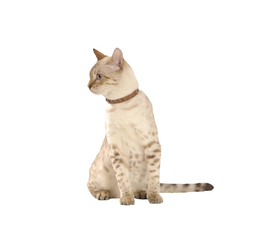 collier chat little cuir chat bobby accessoires pour chien et chat colliers manteaux pulls. Black Bedroom Furniture Sets. Home Design Ideas