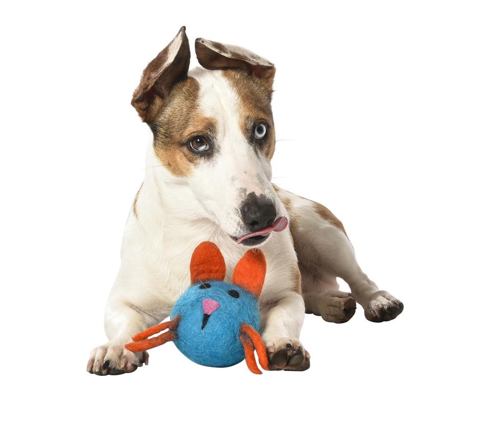jouet laine chien animaux griffoirs bobby accessoires pour chien et chat colliers. Black Bedroom Furniture Sets. Home Design Ideas