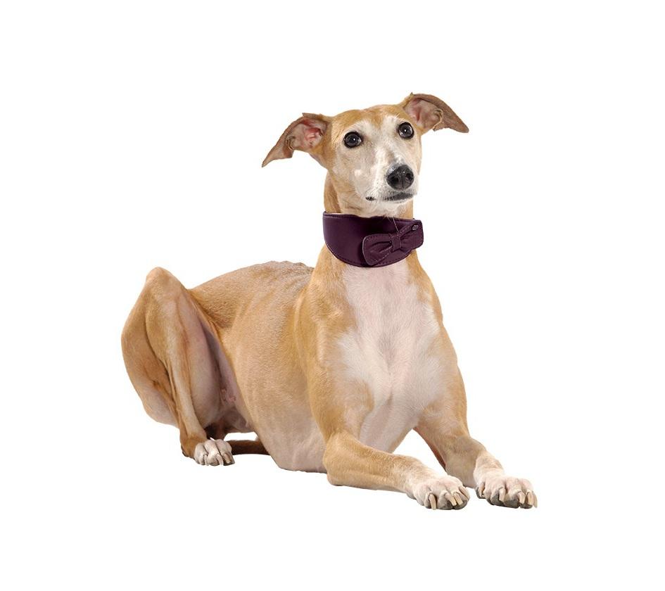 collier levrier victoire cuir chien bobby accessoires pour chien et chat colliers. Black Bedroom Furniture Sets. Home Design Ideas